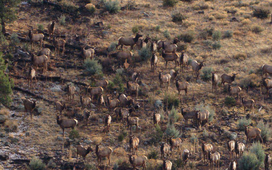 Locating Elk