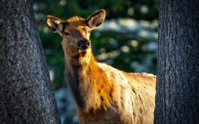Elk Hunting Scent Control Products