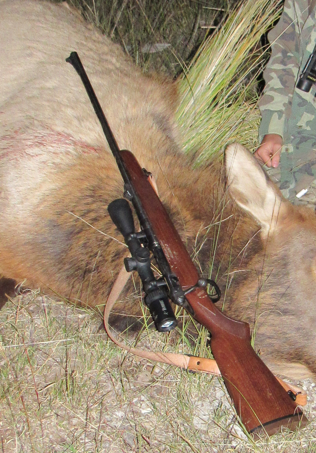 Best Elk Hunting Rifle for Youth - Top 3 Considerations