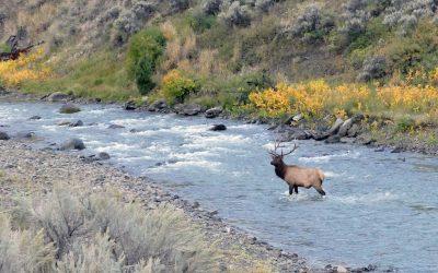Elk Shooting Range