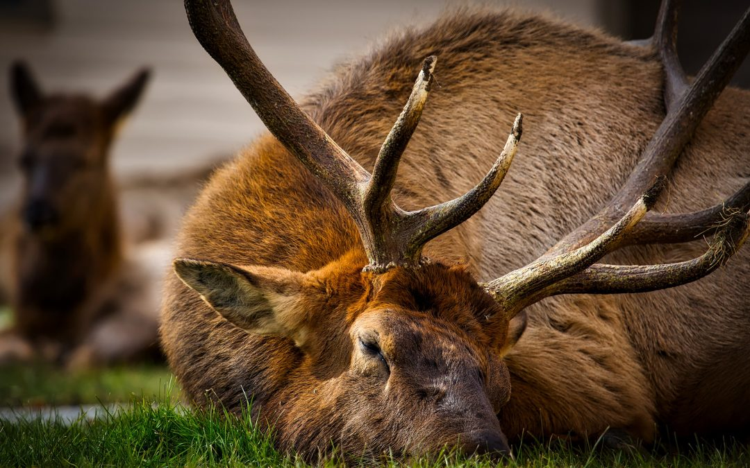 Elk Hunting Application Deadlines