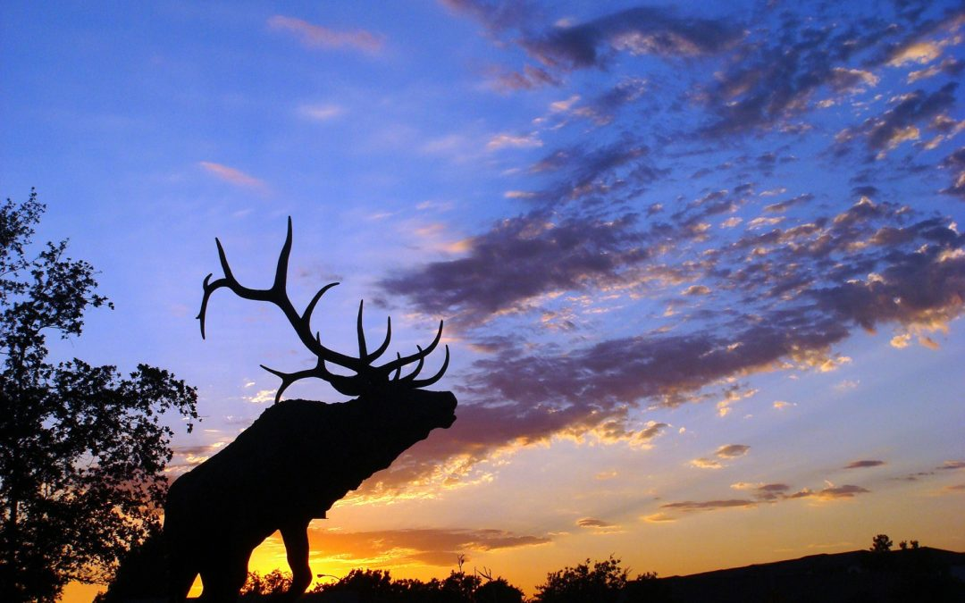 Elk Hunting Success [Video]
